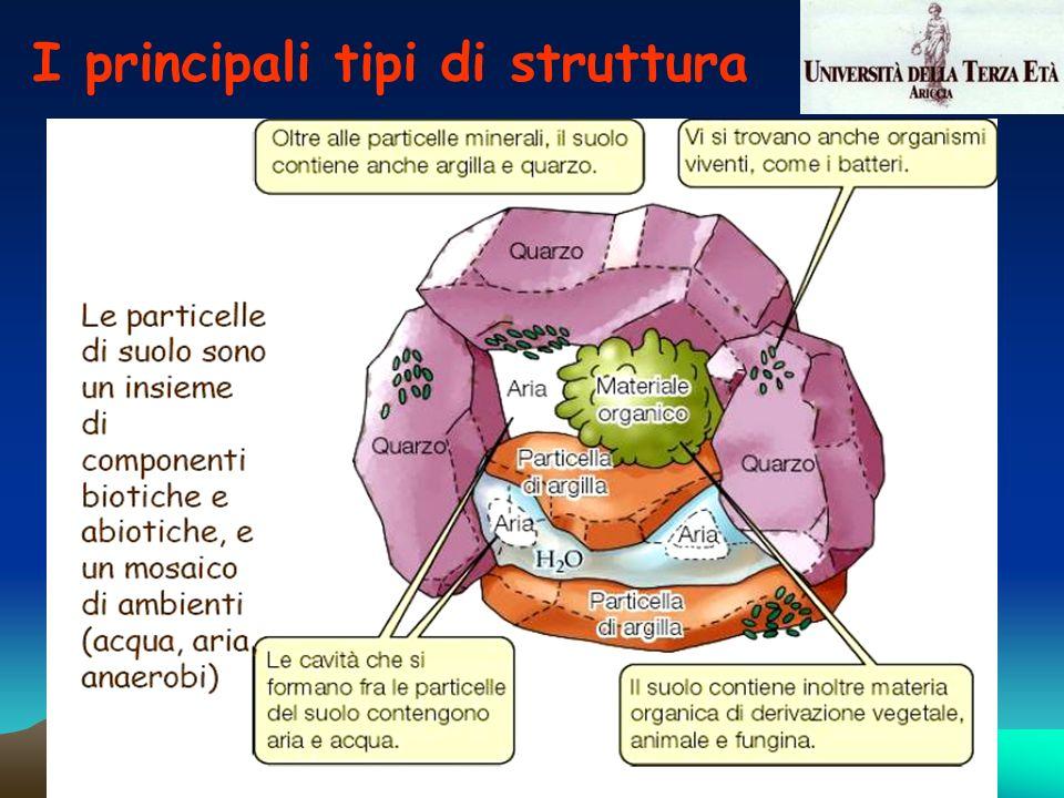 I principali tipi di struttura