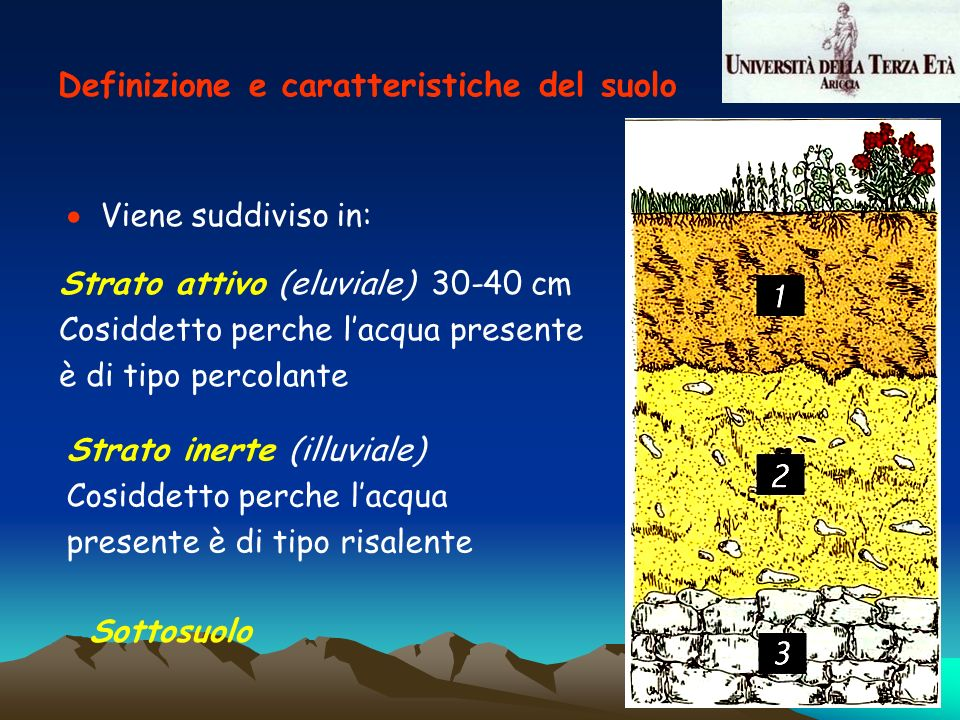 Viene suddiviso in: Strato attivo (eluviale) 30-40 cm Cosiddetto perche lacqua presente è di tipo percolante Strato inerte (illuviale) Cosiddetto perc