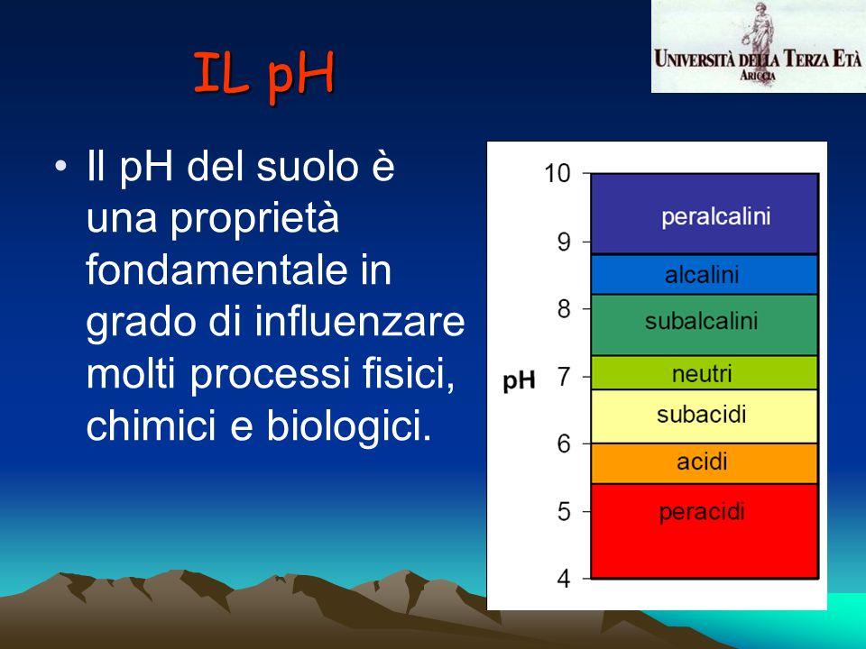 Il pH del suolo è una proprietà fondamentale in grado di influenzare molti processi fisici, chimici e biologici. IL pH
