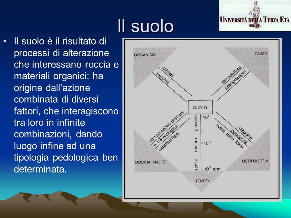 Il suolo Il suolo è il risultato di processi di alterazione che interessano roccia e materiali organici: ha origine dallazione combinata di diversi fa