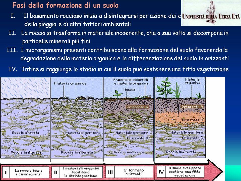 I. Il basamento roccioso inizia a disintegrarsi per azione dei cicli di gelo e disgelo, della pioggia e di altri fattori ambientali II. La roccia si t