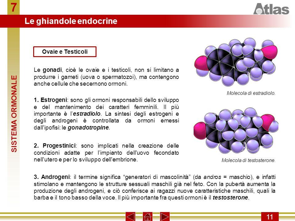 7 11 Le gonadi, cioè le ovaie e i testicoli, non si limitano a produrre i gameti (uova o spermatozoi), ma contengono anche cellule che secernono ormon