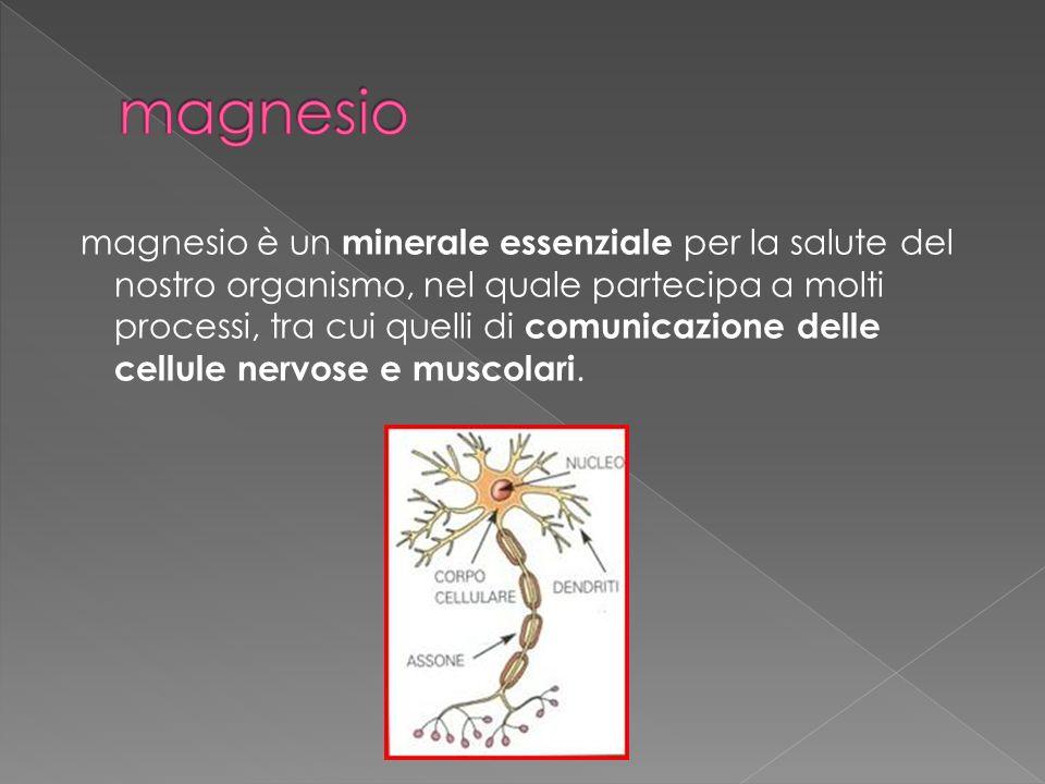 magnesio è un minerale essenziale per la salute del nostro organismo, nel quale partecipa a molti processi, tra cui quelli di comunicazione delle cellule nervose e muscolari.