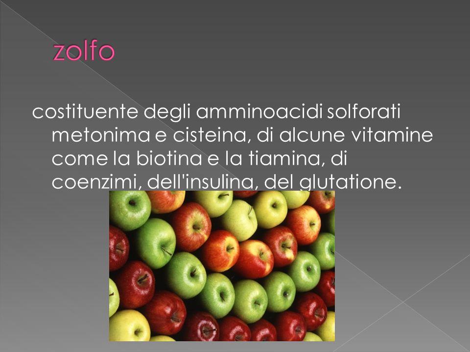 costituente degli amminoacidi solforati metonima e cisteina, di alcune vitamine come la biotina e la tiamina, di coenzimi, dell insulina, del glutatione.