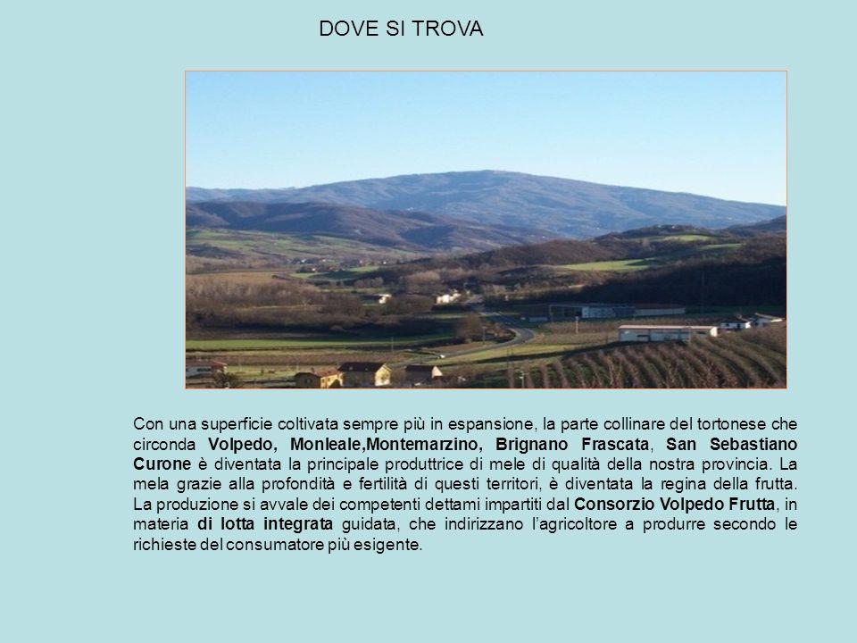Con una superficie coltivata sempre più in espansione, la parte collinare del tortonese che circonda Volpedo, Monleale,Montemarzino, Brignano Frascata