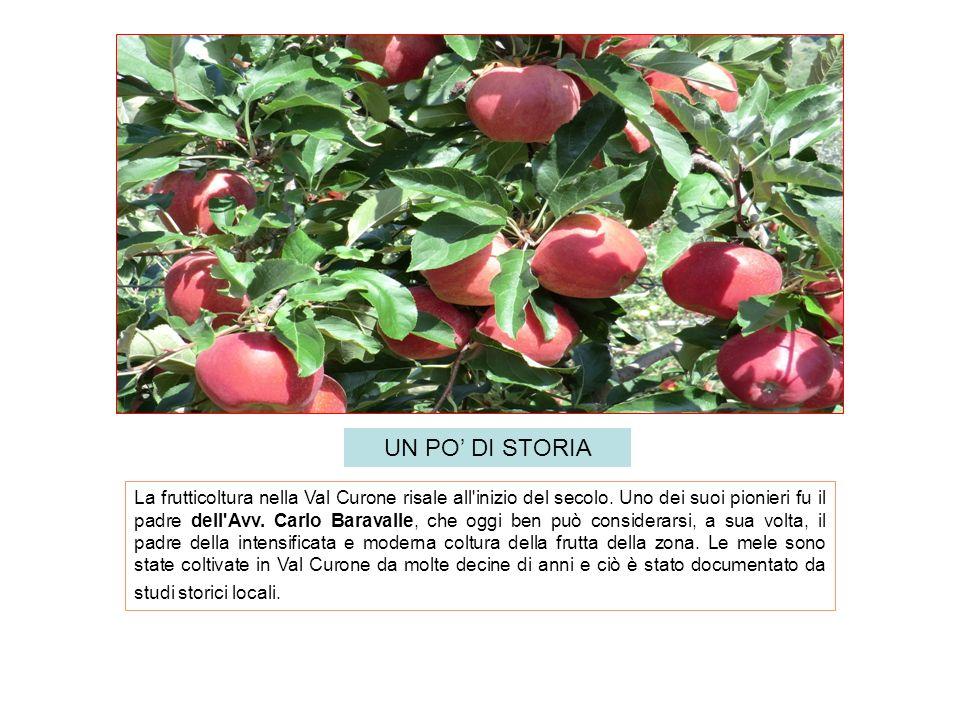 La frutticoltura nella Val Curone risale all'inizio del secolo. Uno dei suoi pionieri fu il padre dell'Avv. Carlo Baravalle, che oggi ben può consider