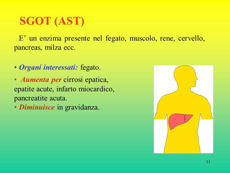 11 SGOT (AST) E un enzima presente nel fegato, muscolo, rene, cervello, pancreas, milza ecc.