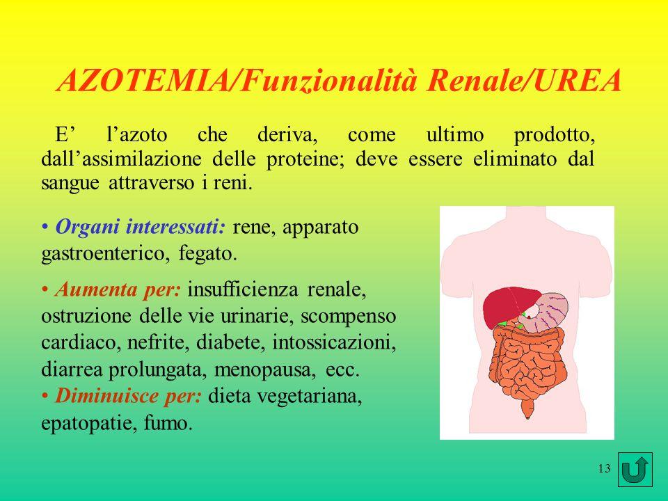 13 AZOTEMIA/Funzionalità Renale/UREA E lazoto che deriva, come ultimo prodotto, dallassimilazione delle proteine; deve essere eliminato dal sangue attraverso i reni.