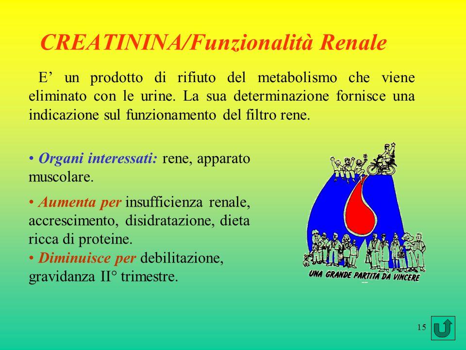 15 CREATININA/Funzionalità Renale E un prodotto di rifiuto del metabolismo che viene eliminato con le urine. La sua determinazione fornisce una indica