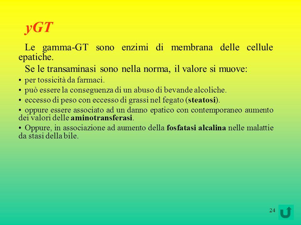 24 yGT Le gamma-GT sono enzimi di membrana delle cellule epatiche. Se le transaminasi sono nella norma, il valore si muove: per tossicità da farmaci.
