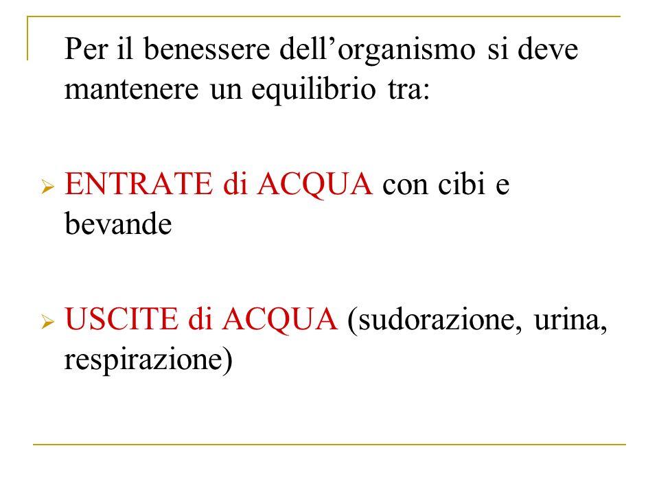 Per il benessere dellorganismo si deve mantenere un equilibrio tra: ENTRATE di ACQUA con cibi e bevande USCITE di ACQUA (sudorazione, urina, respirazione)