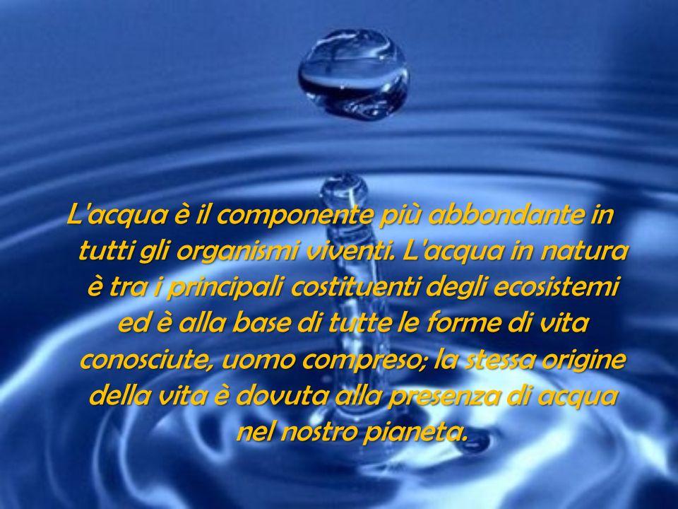 L acqua è un ottimo solvente grazie alla polarità delle sue molecole.