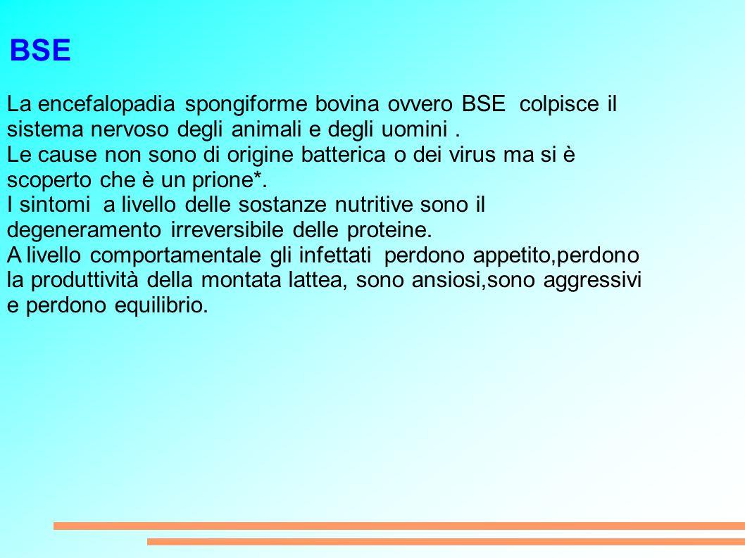 BSE La encefalopadia spongiforme bovina ovvero BSE colpisce il sistema nervoso degli animali e degli uomini.