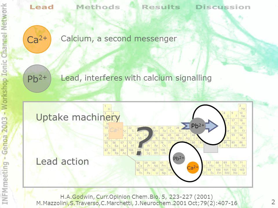 Rat cerebellar granule cells Membrane permeant high affinity fluorescent dye: Indo-1 Two-photon laser scanning microscopy (TPLSM) TPEN (100M) Pb 2+ 45´ Indo-1 AM - 1 M 30´ Standard solution @37°C Probe, model and microscopy choice 3