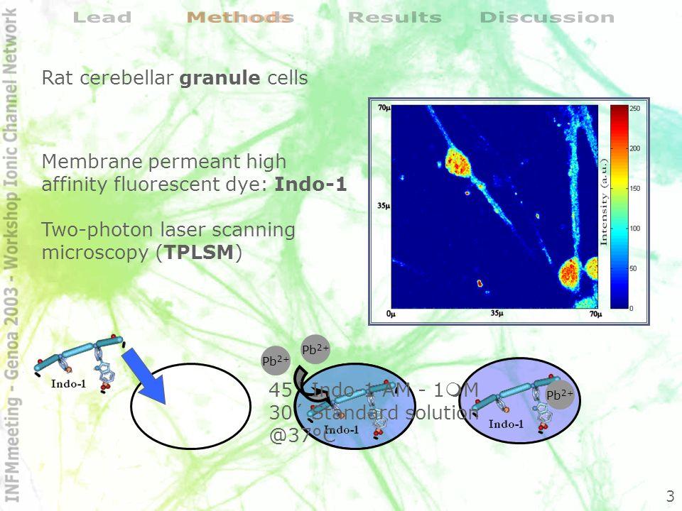 Pb 2+ M.E.Legare, R.Barhoumi, E.Hebert, G.R.Bratton, R.C.Burghardt and E.Tiffany-Castiglioni, Analysis of Pb2+ Entry into Cultured Astroglia, Toxicological Sciences 46, 90-100 (1998) Figura 5 a) rappresentazione delleccitazione a doppio fotone di una molecola di Indo-1.