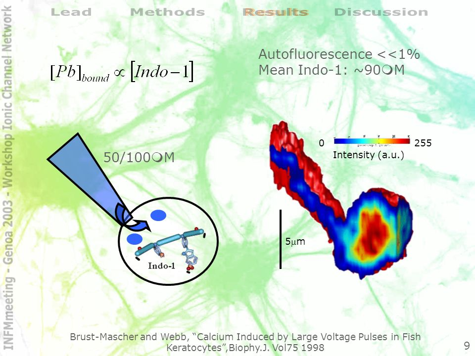 -75% -60% -45% -30% -15% 0% 02468 Time (min) Fluorescence variations (%) Fluorescence variations Photobleaching Pb 2+ (20µM) 5 15 25 35 45 55 65 75 024 Time (min) Estimated concentration (µM) Pb 2+ (20µM) ~ bound Lead uptake Var: 54±6% Raw: 67±9% Sat: 63±7% 10