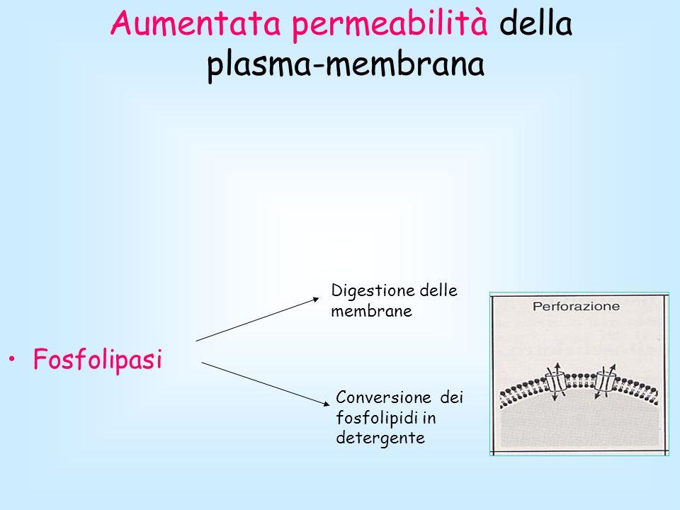 Aumentata permeabilità della plasma-membrana Fosfolipasi Digestione delle membrane Conversione dei fosfolipidi in detergente
