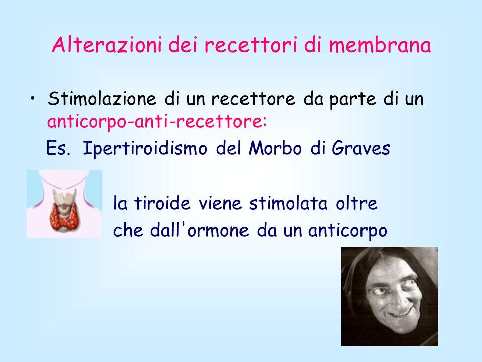 Alterazioni dei recettori di membrana Stimolazione di un recettore da parte di un anticorpo-anti-recettore: Es. Ipertiroidismo del Morbo di Graves la