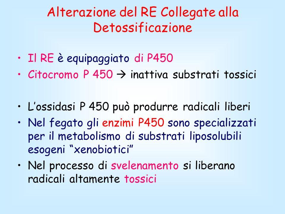 Alterazione del RE Collegate alla Detossificazione Il RE è equipaggiato di P450 Citocromo P 450 inattiva substrati tossici Lossidasi P 450 può produrr