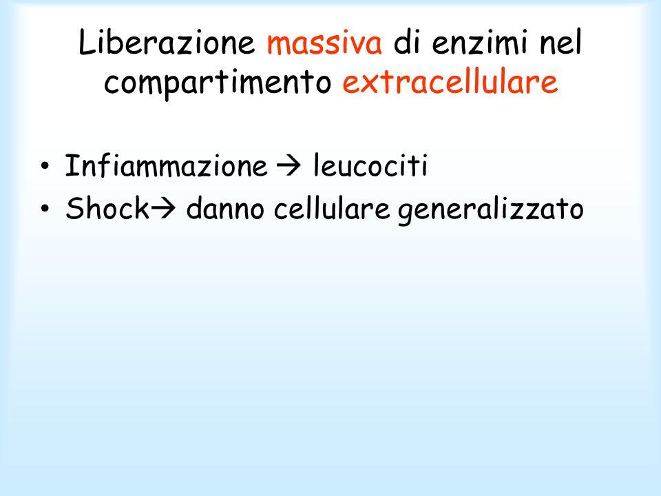 Liberazione massiva di enzimi nel compartimento extracellulare Infiammazione leucociti Shock danno cellulare generalizzato