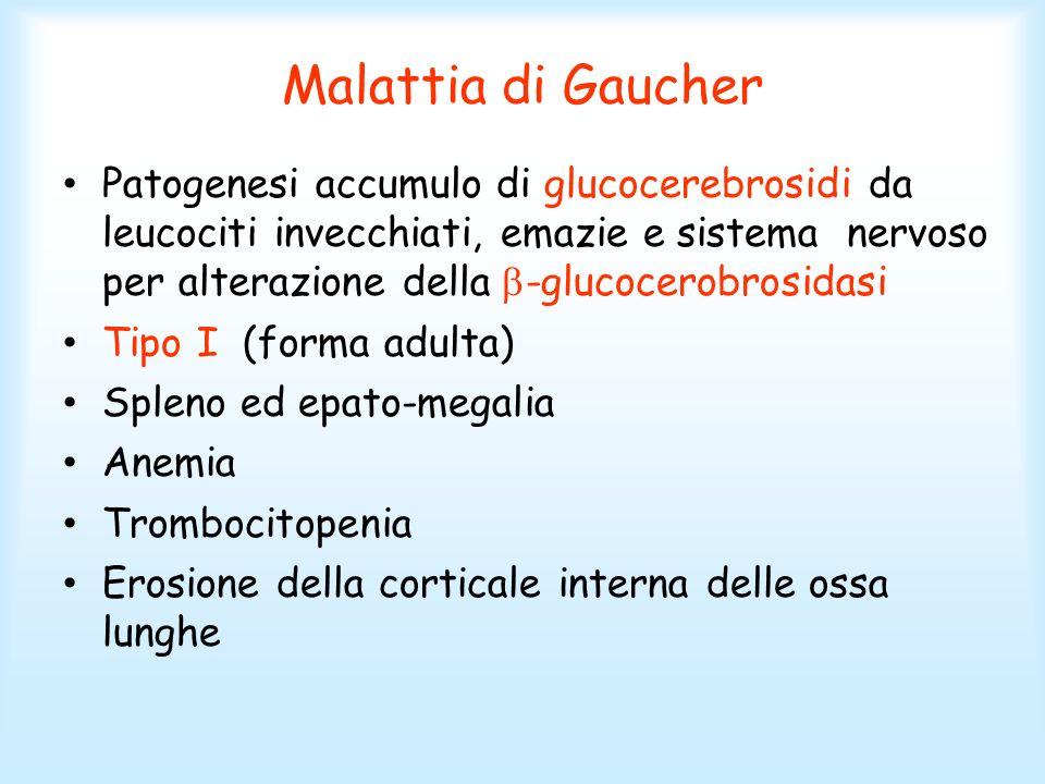 Malattia di Gaucher Patogenesi accumulo di glucocerebrosidi da leucociti invecchiati, emazie e sistema nervoso per alterazione della -glucocerobrosida