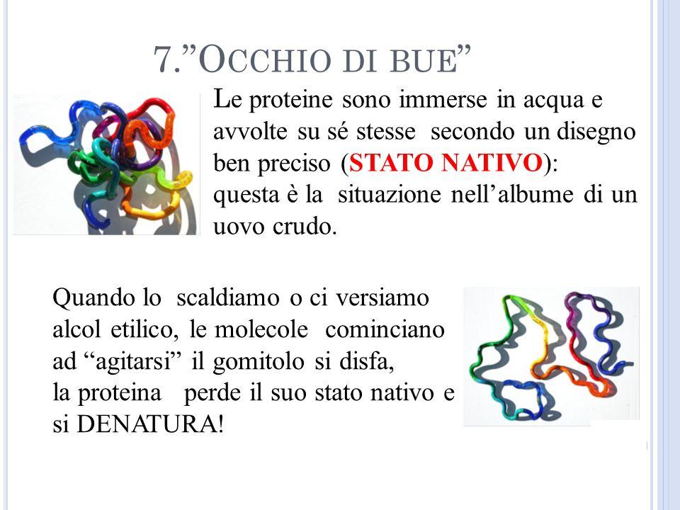 L e proteine sono immerse in acqua e avvolte su sé stesse secondo un disegno ben preciso (STATO NATIVO): questa è la situazione nellalbume di un uovo crudo.