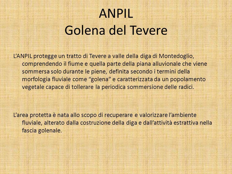 ANPIL Golena del Tevere LANPIL protegge un tratto di Tevere a valle della diga di Montedoglio, comprendendo il fiume e quella parte della piana alluvi