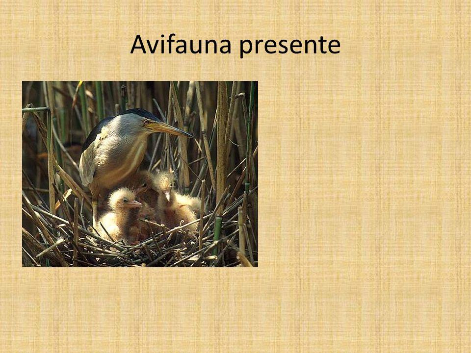 Avifauna presente