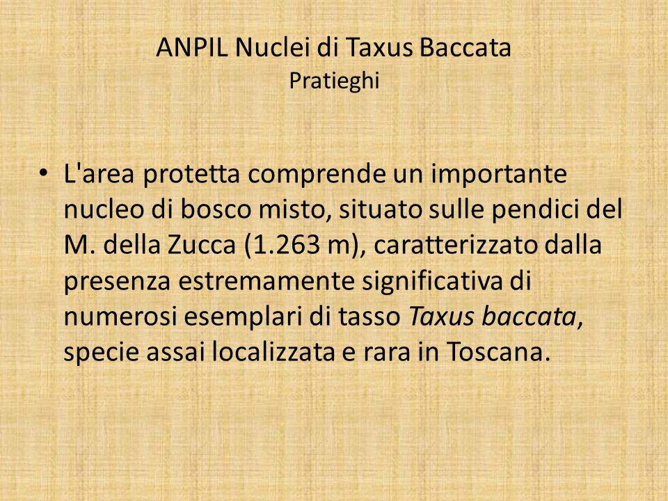ANPIL Nuclei di Taxus Baccata Pratieghi L'area protetta comprende un importante nucleo di bosco misto, situato sulle pendici del M. della Zucca (1.263