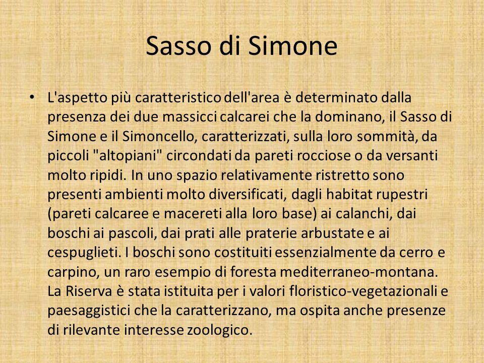 Sasso di Simone L'aspetto più caratteristico dell'area è determinato dalla presenza dei due massicci calcarei che la dominano, il Sasso di Simone e il