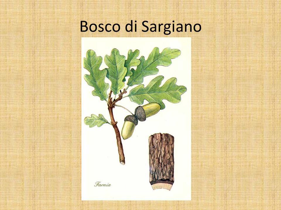 Bosco di Sargiano