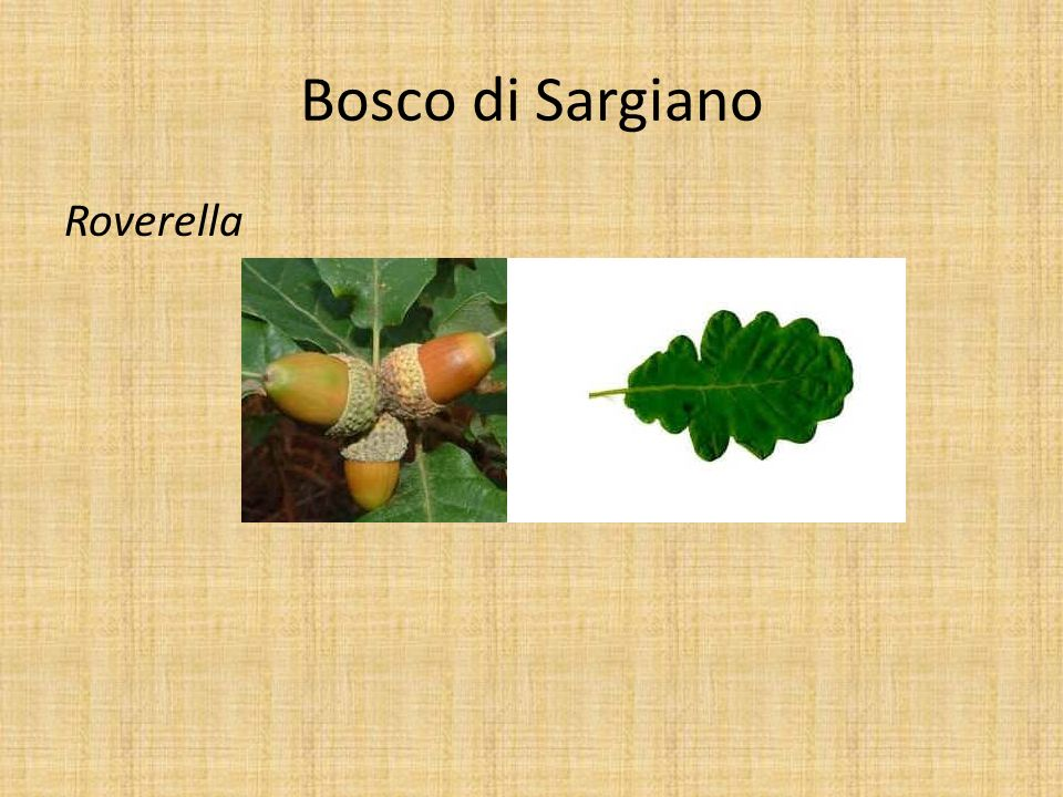 Bosco di Sargiano Roverella