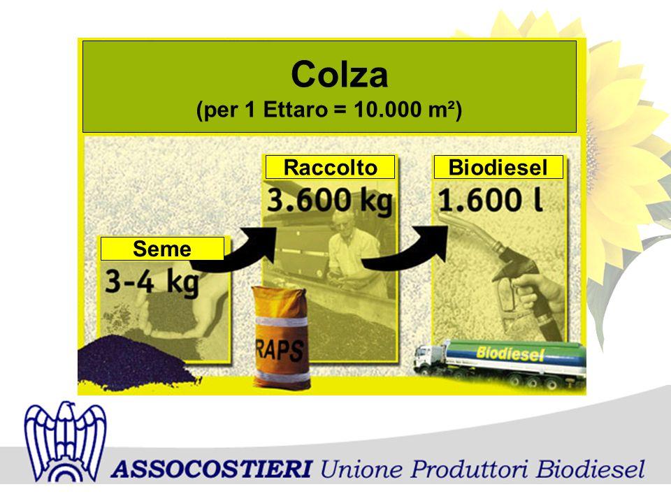 Colza (per 1 Ettaro = 10.000 m²) Seme RaccoltoBiodiesel