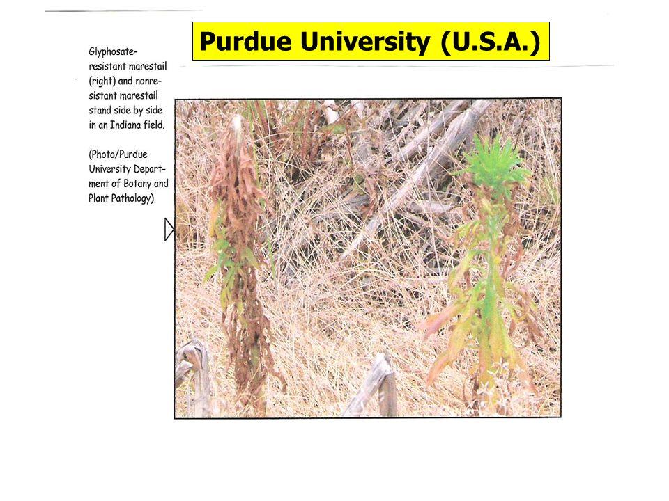 Purdue University (U.S.A.)