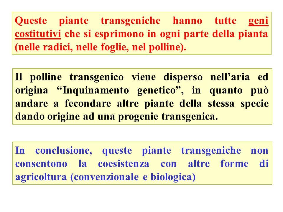 Queste piante transgeniche hanno tutte geni costitutivi che si esprimono in ogni parte della pianta (nelle radici, nelle foglie, nel polline). Il poll