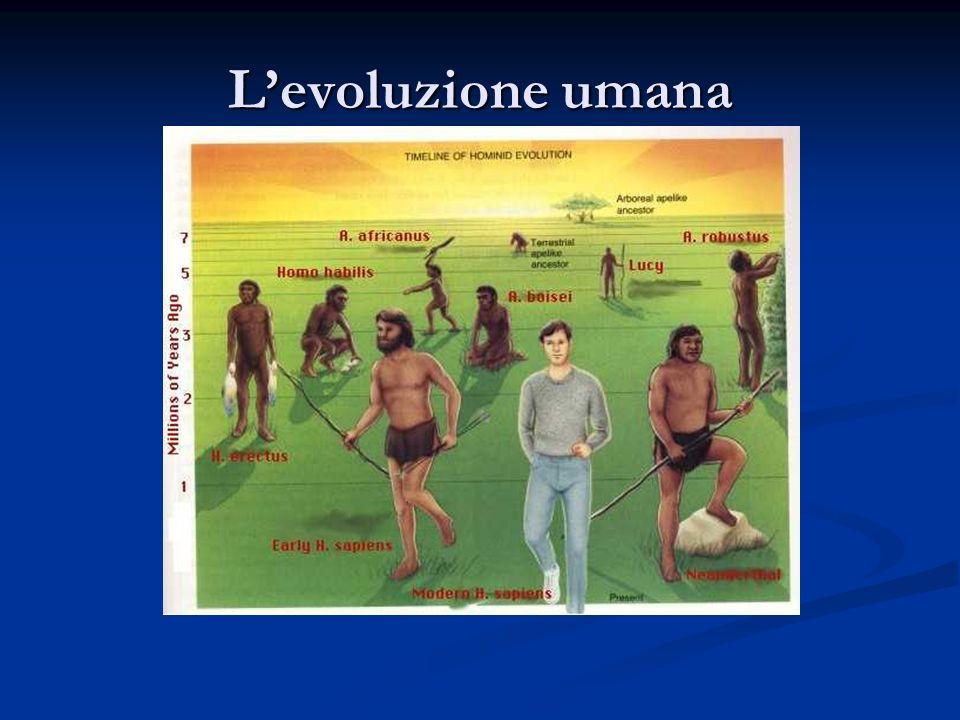 Levoluzione umana