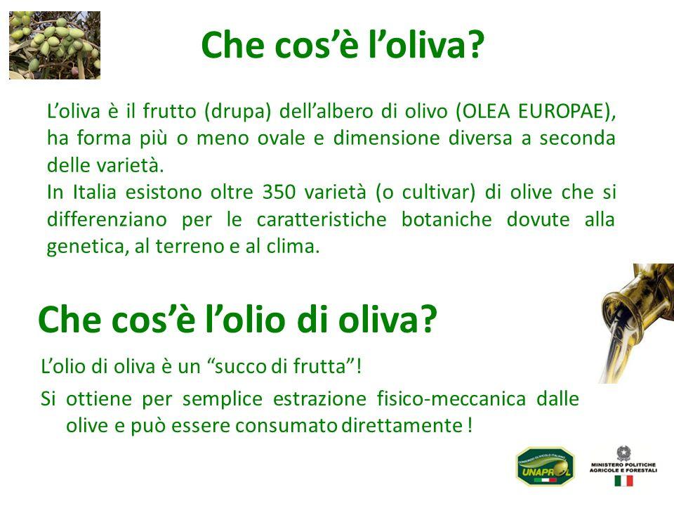 Loliva è il frutto (drupa) dellalbero di olivo (OLEA EUROPAE), ha forma più o meno ovale e dimensione diversa a seconda delle varietà. In Italia esist