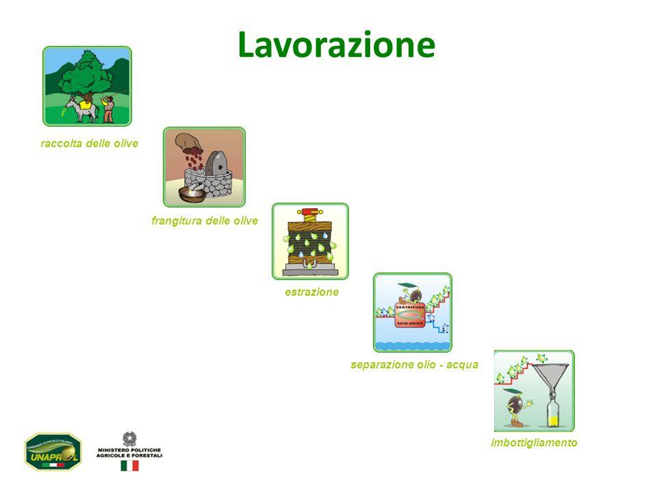 Lolio ottenuto direttamente dalle olive e unicamente mediante procedimenti meccanici e che rispetta determinati parametri di legge.