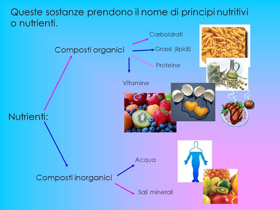 I principi nutritivi hanno diverse funzioni: Energetica: dare energia; Plastica: riparare e costruire tessuti e cellule; Protettiva e regolativa: mantenere un corretto funzionamento delle reazioni chimiche all interno del nostro organismo.