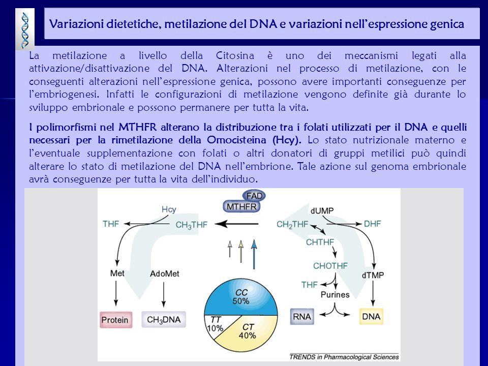 La metilazione a livello della Citosina è uno dei meccanismi legati alla attivazione/disattivazione del DNA.