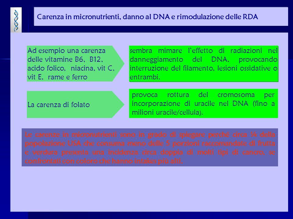 provoca rottura del cromosoma per incorporazione di uracile nel DNA (fino a milioni uracile/cellula ).