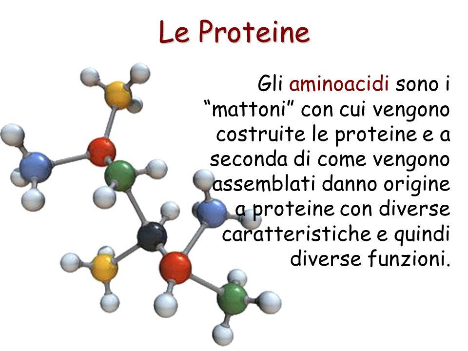 Le Proteine Gli aminoacidi sono i mattoni con cui vengono costruite le proteine e a seconda di come vengono assemblati danno origine a proteine con di