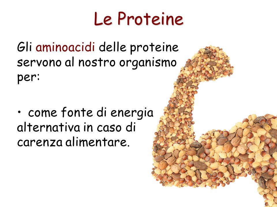 Le Proteine come fonte di energia alternativa in caso di carenza alimentare. Gli aminoacidi delle proteine servono al nostro organismo per: