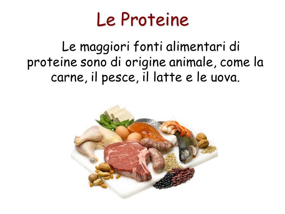 Le Proteine Le maggiori fonti alimentari di proteine sono di origine animale, come la carne, il pesce, il latte e le uova.