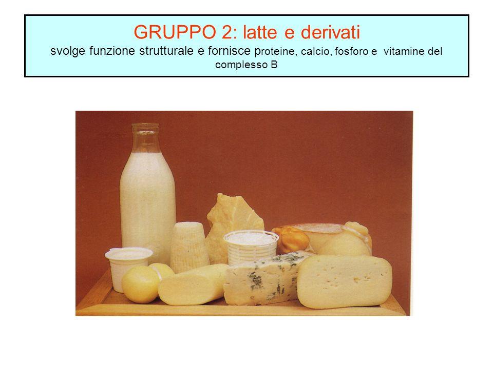 GRUPPO 2: latte e derivati svolge funzione strutturale e fornisce p roteine, calcio, fosforo e vitamine del complesso B
