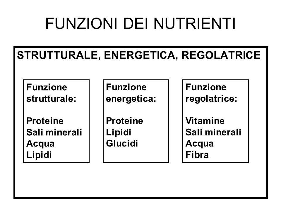FUNZIONI DEI NUTRIENTI STRUTTURALE, ENERGETICA, REGOLATRICE Funzione strutturale: Proteine Sali minerali Acqua Lipidi Funzione energetica: Proteine Li