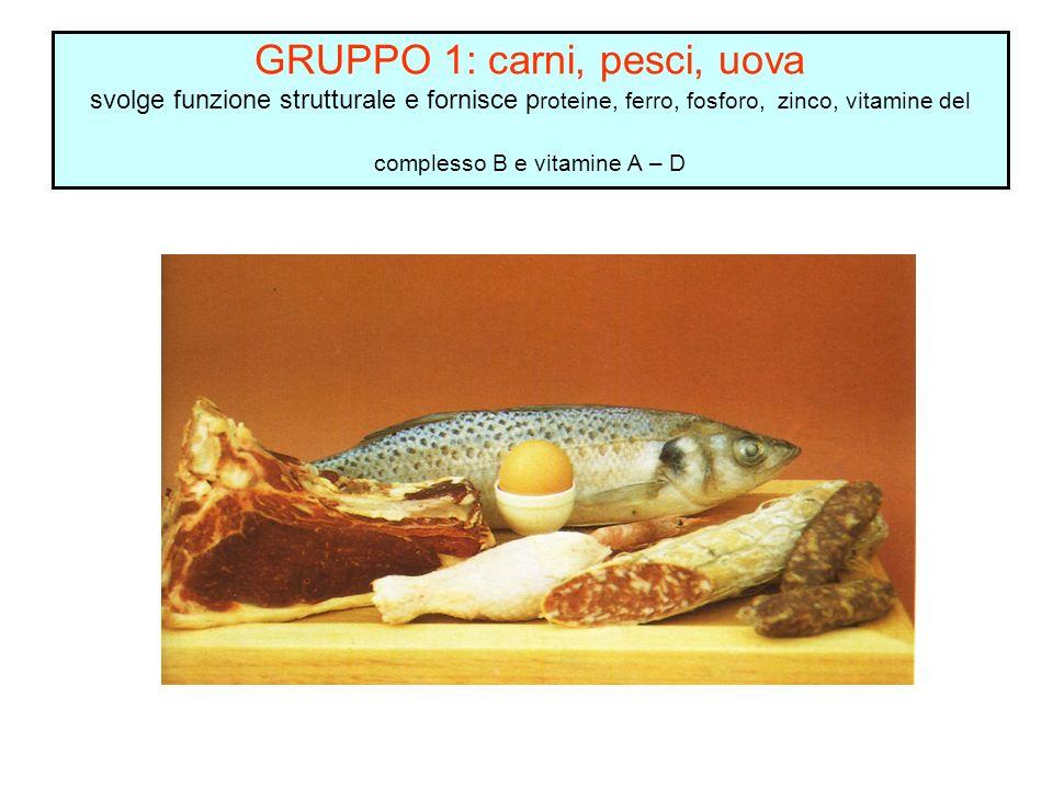 GRUPPO 1: carni, pesci, uova svolge funzione strutturale e fornisce p roteine, ferro, fosforo, zinco, vitamine del complesso B e vitamine A – D