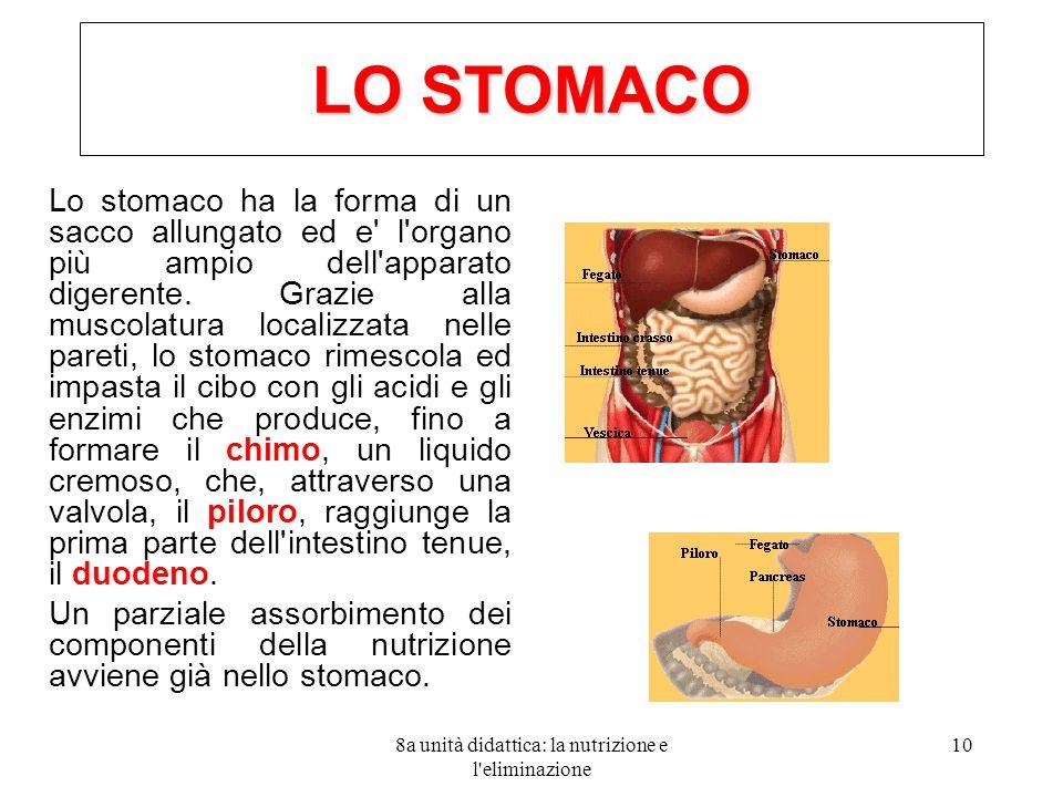 8a unità didattica: la nutrizione e l'eliminazione 10 LO STOMACO Lo stomaco ha la forma di un sacco allungato ed e' l'organo più ampio dell'apparato d