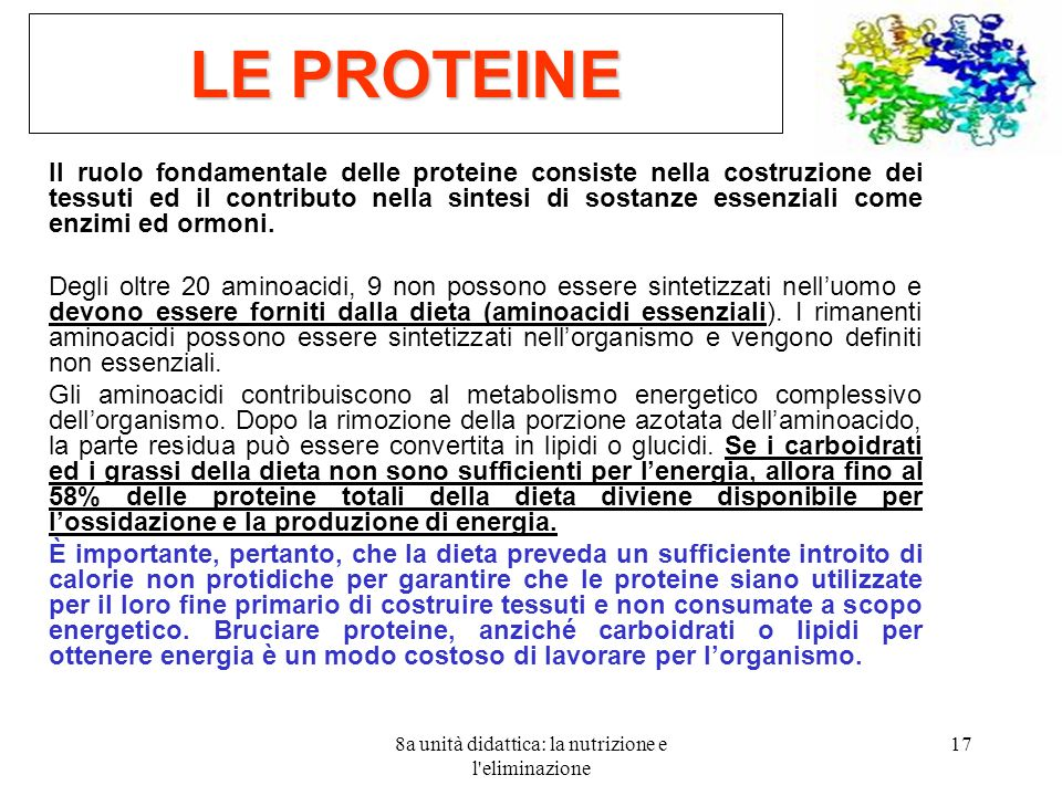 8a unità didattica: la nutrizione e l'eliminazione 17 LE PROTEINE Il ruolo fondamentale delle proteine consiste nella costruzione dei tessuti ed il co