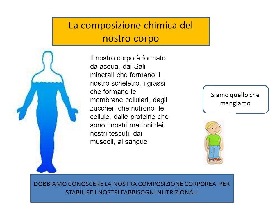 La composizione chimica del nostro corpo DOBBIAMO CONOSCERE LA NOSTRA COMPOSIZIONE CORPOREA PER STABILIRE I NOSTRI FABBISOGNI NUTRIZIONALI Siamo quello che mangiamo Il nostro corpo è formato da acqua, dai Sali minerali che formano il nostro scheletro, i grassi che formano le membrane cellulari, dagli zuccheri che nutrono le cellule, dalle proteine che sono i nostri mattoni dei nostri tessuti, dai muscoli, al sangue